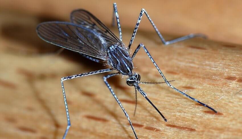 Предстои ново пръскане срещу комари в Русе