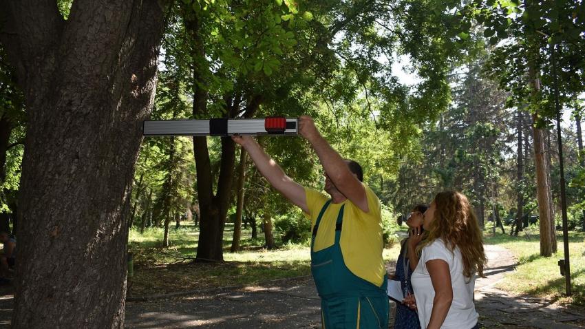 """""""Паркстрой"""" започна да обследва състоянието на дърветата в Разград"""