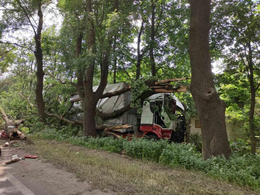 ТИР помете крайпътни дървета на Русе - Бяла /ВИДЕО и СНИМКИ/