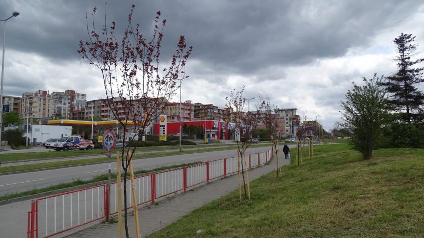 Над 360 дървета и храсти са засадени във Велико Търново през тази пролет