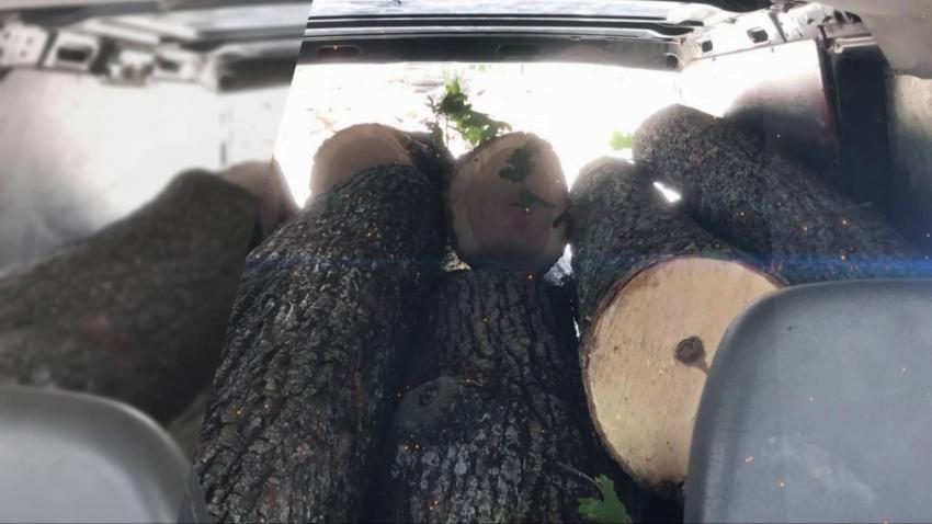 Хванаха четирима извършители на незаконна сеч в Разградско /ВИДЕО/