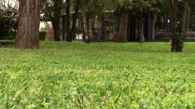 В община Разград започна обработката срещу кръжлежи на тревните площи и детските площадки /ВИДЕО/